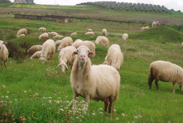 Οι εξελίξεις στην αιγοπροβατοτροφία σε ημερίδα στην Κοζάνη