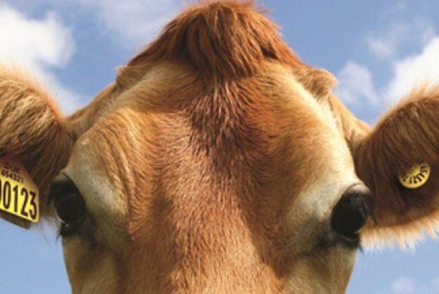 Ανησυχία για την βοοτροφία της Ε.Ε. εκφράζουν Copa και Cogeca