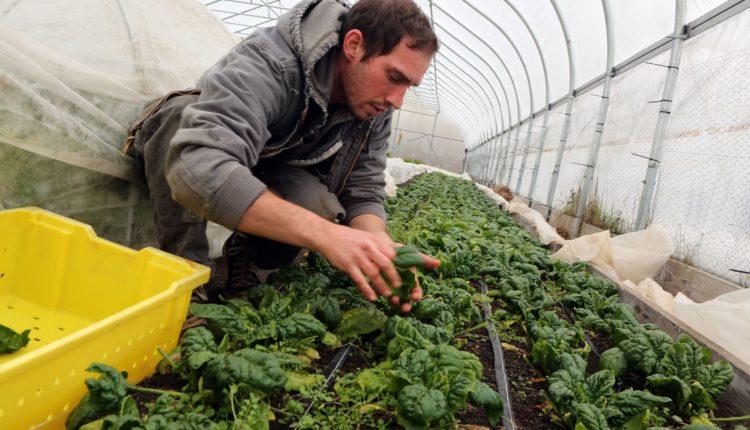 Νέα σειρά εκδηλώσεων για νέους στο χώρο της αγροδιατροφής από το πρόγραμμα «Νέα Γεωργία για τη Νέα Γενιά»