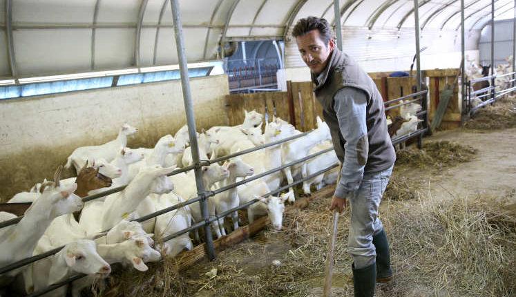Ενίσχυση σε κτηνοτρόφους για την εξυγίανση του ζωικού κεφαλαίου
