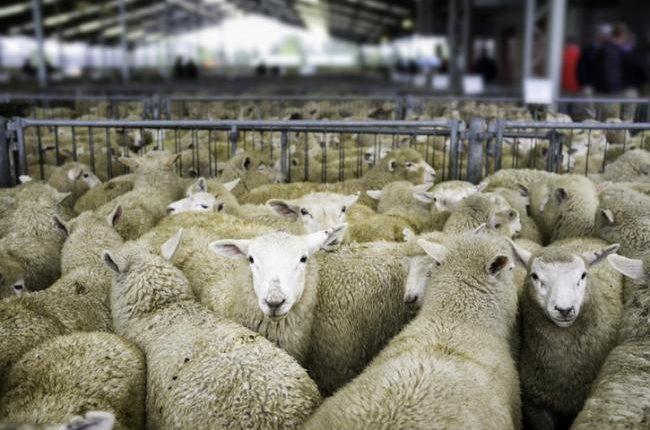 ΣΕΚ: Να ενταχθούν και οι κτηνοτρόφοι στη λίστα με τους κλάδους που εντάσσονται στα μέτρα στήριξης