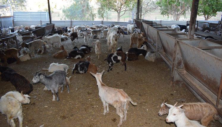 Σύνδεσμος Ελληνικής Κτηνοτροφίας: Παρατηρήσεις στο Σχέδιο Νόμου για την κτηνοτροφία