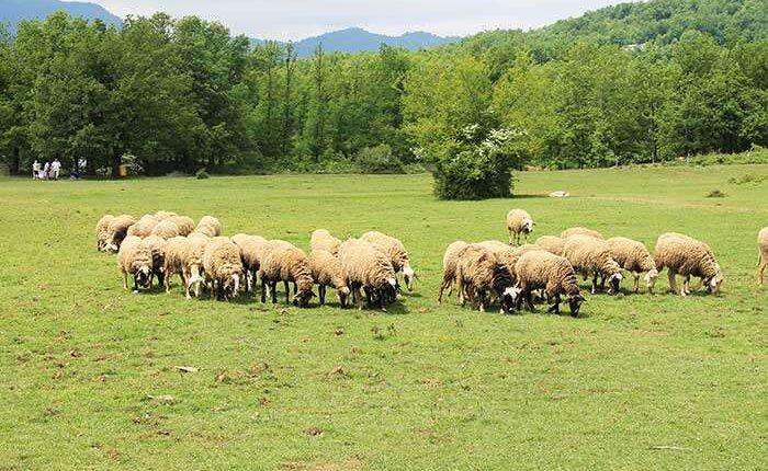 Κτηνοτροφικός Σύλλογος Περιφέρειας Αττικής: «Αγροτική Επιχειρηματικότητα – Βοσκήσιμες γαίες»