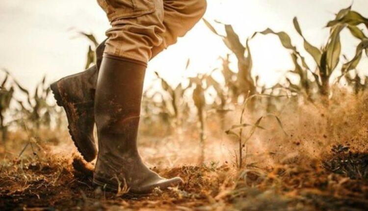 Χαμηλότοκα δάνεια σε αγρότες μέσω του Ταμείου Εγγυοδοσίας Αγροτικής Ανάπτυξης